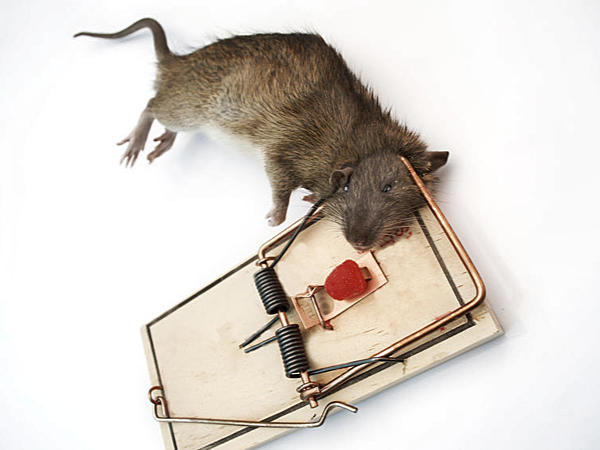 Rats Options